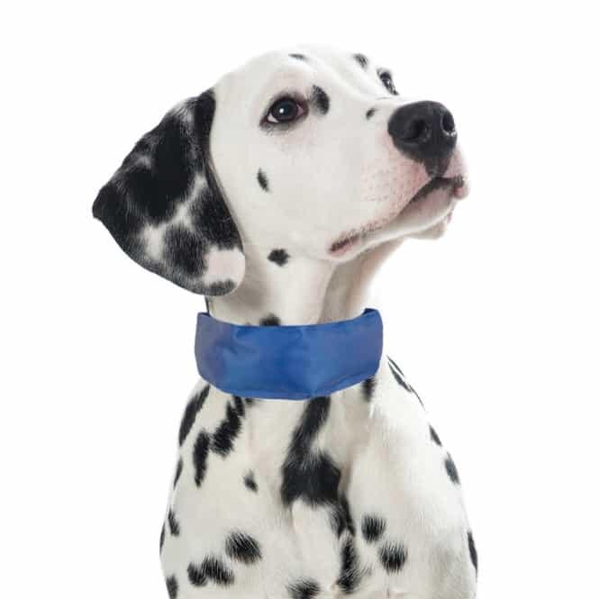 PROCYON Kühl-Bandana für Hunde L