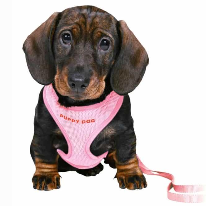 Trixie Welpengarnitur für kleine Rassen rosa